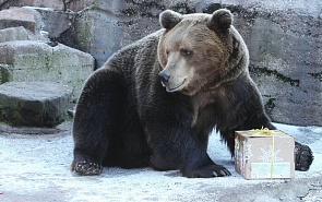 In China's Footsteps: Why the Russian Bear Should Enter Stealth Mode